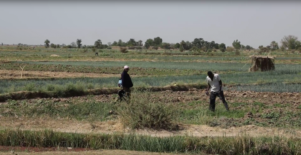 Mali's new agricultural land law paves the way for scaling up the role of local land commissions piloted by the Tenure Facility