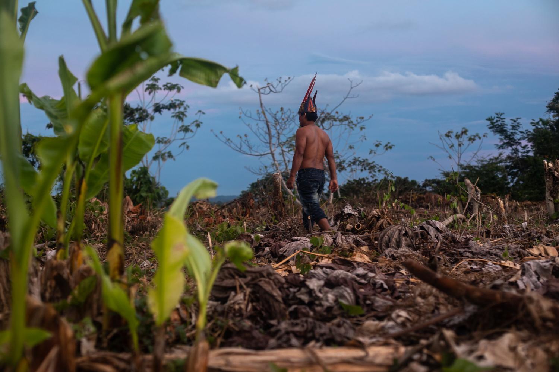 Peru deforestation